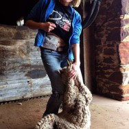 Foto: junge Auswanderin zeigt ihren Stoma-Beutel beim Schafe-scheren in Australien